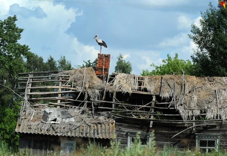 Кудричи - умирающая деревня.