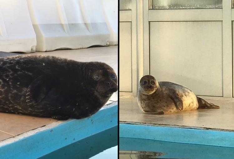 Морозова (слева) и Шлиссик (справа) пытаются хоть как-то подружиться с Крошем. Фото: vk.com/sealrescue