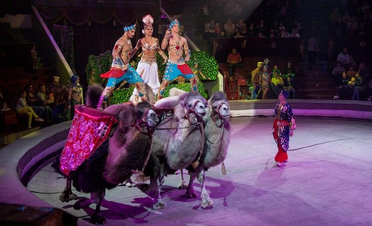 На арене пермского цирка выступают самые известные труппы.