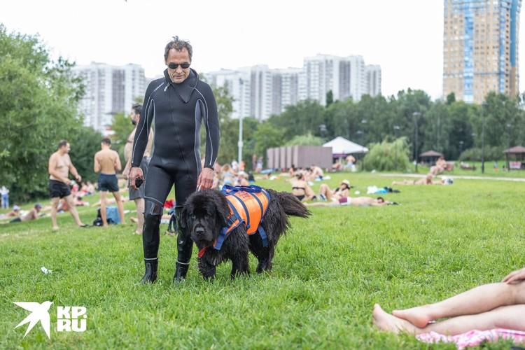 Собаки-спасатели в Москве патрулируют пляжи в Строгино.