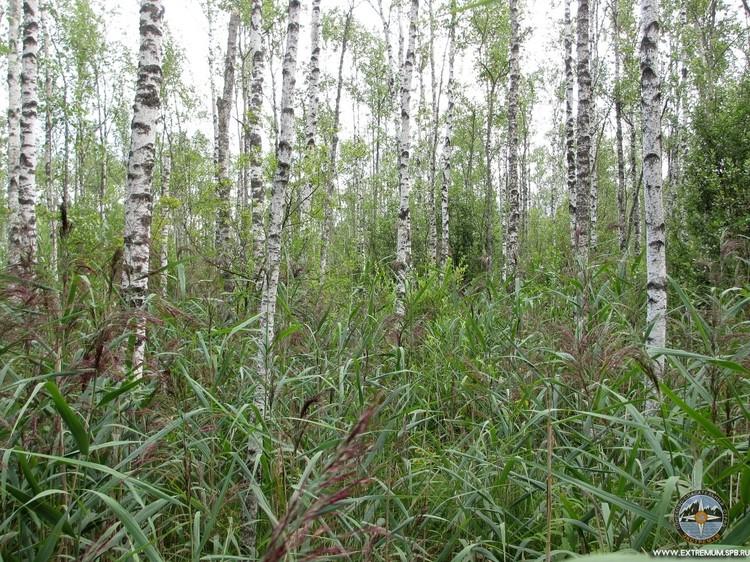 В таком лесу искали пенсионерку Фото: Николая Синюрина и Валерии Верховодко/Экстремум