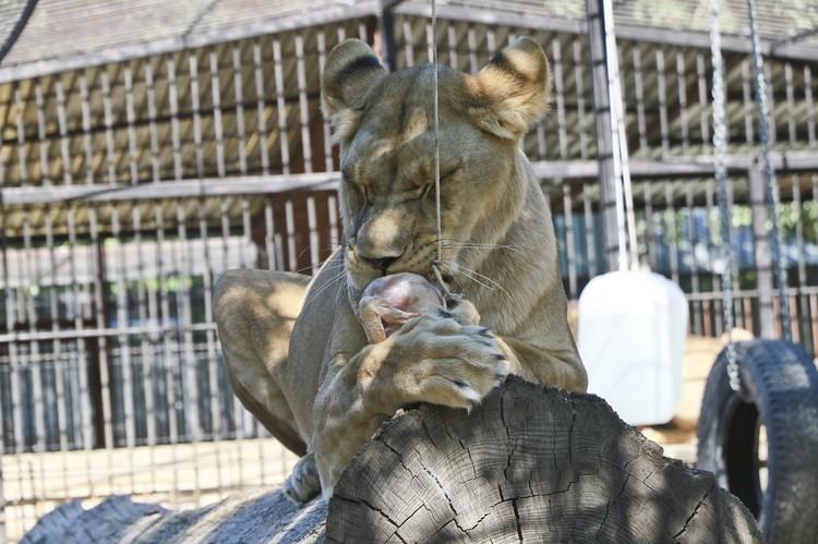 10-летие Барнаульского зоопарка.