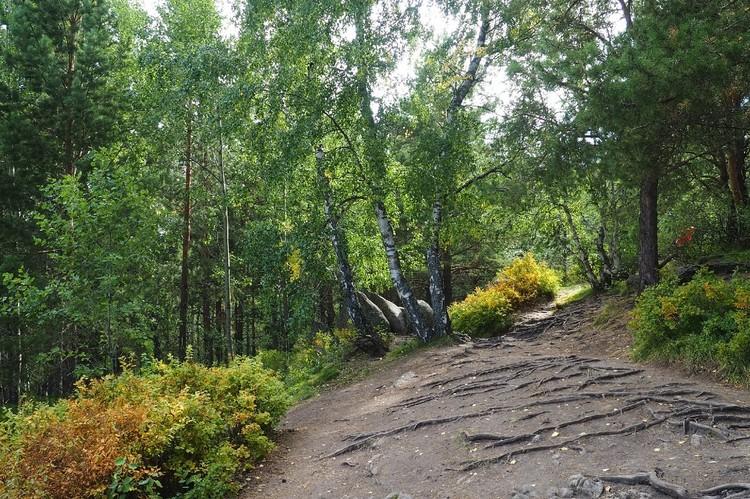 Сама тропинка на вершине Церковки выглядит мистически.