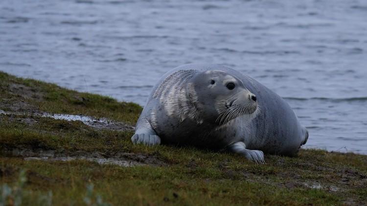За время экспедиции участники встретили тюленя в дикой природе, а также смогли увидеть северных оленей, песца, лемминга и много разных птиц