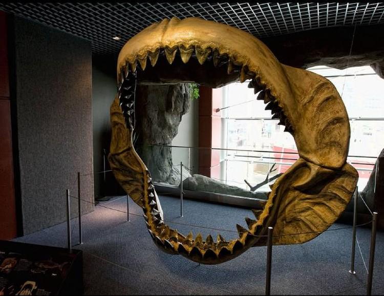 Реконструированная челюсть мегалодона в натуральную величину.
