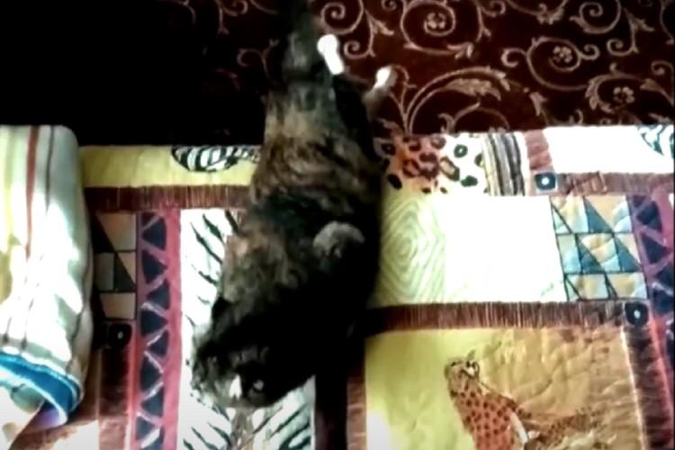 Теперь Василиса может запрыгивать на диван. Фото: стоп-кадр