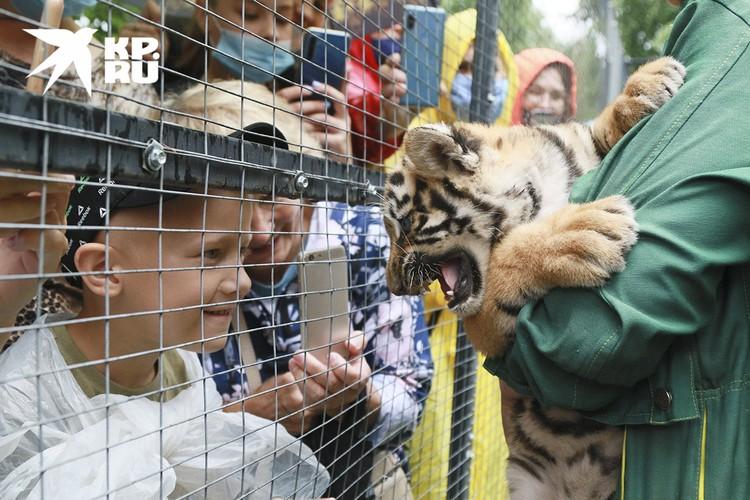 Дети в зоопарке Барнаула во время дня тигра.