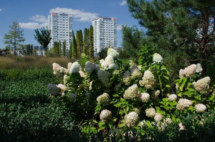 Несмотря на трудности, хотя бы озеленение парка не забросили. Деревьев, кустарников и клумб становится больше.