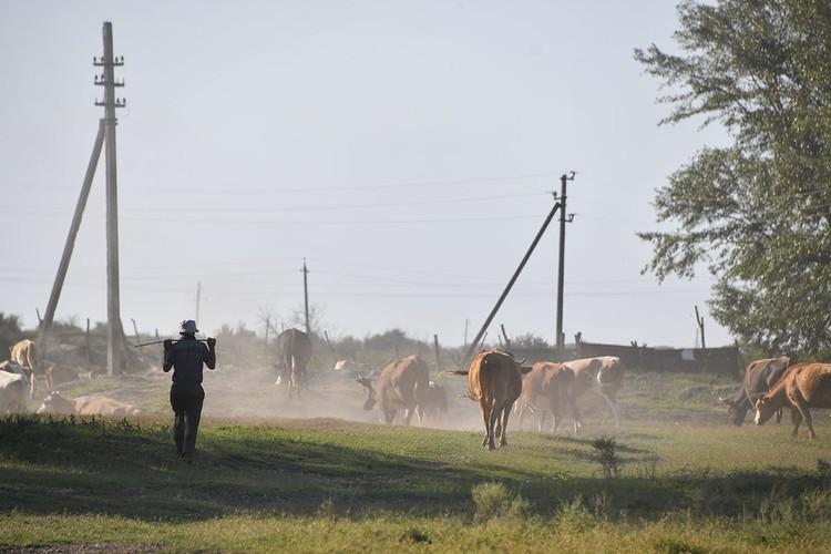 Многие фермерские хозяйства располагаются в долине реки Терека и поэтому страдают от паводков.