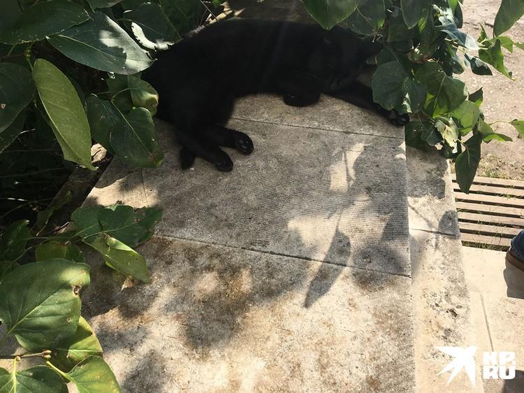 Множество бородатых котов с суровыми лицами Льва Николаевича, валялось прямо на дорожках и не желало уходить даже под угрозой наступления туристов.