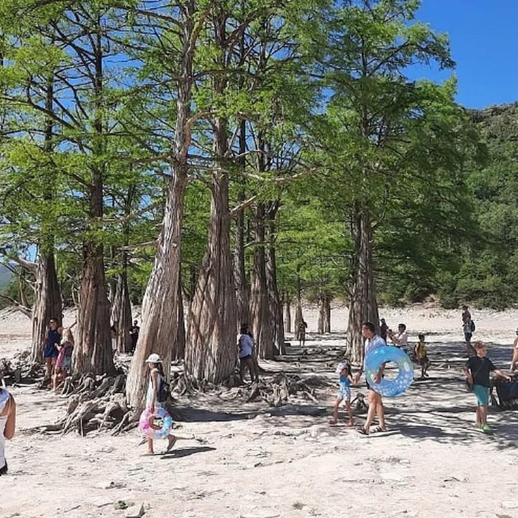 До закрытия туристы приезжали посмотреть на кипарисы каждый день, несмотря даже на то, что озеро высохло. Фото: instagram.com/typoanapa2.0/