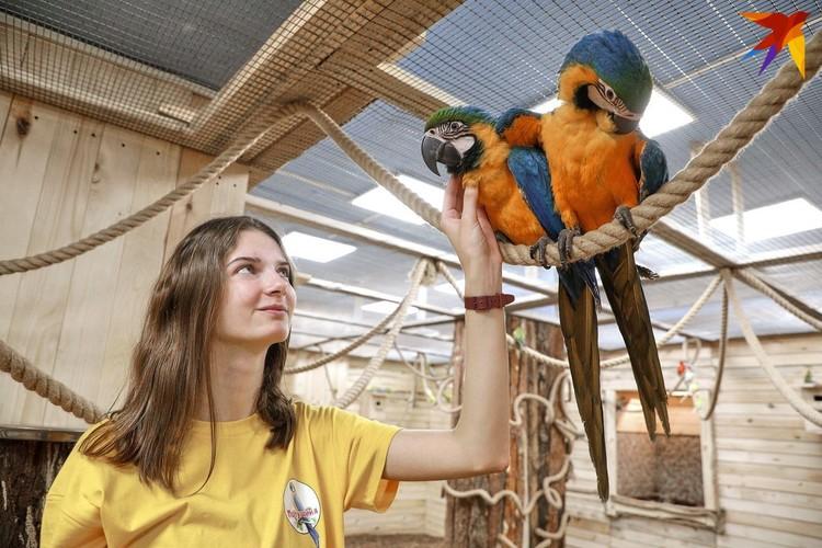 Все внимание сразу приковывают к себе два больших попугая ара.