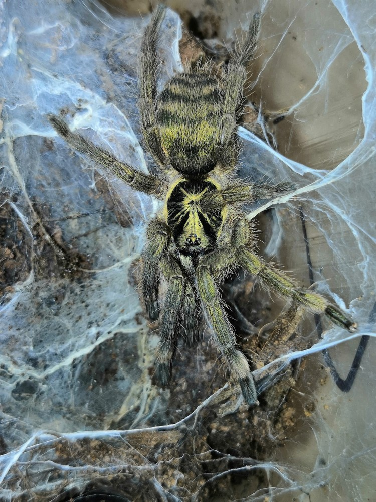 Мама парня пауков не боится. Фото: Дмитрий ЖЕЛТИКОВ.