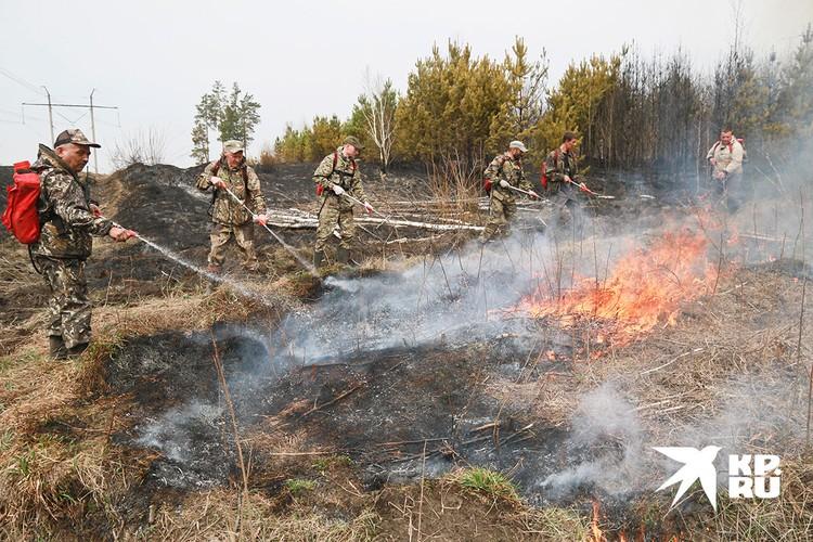 Пожары уничтожают лес.