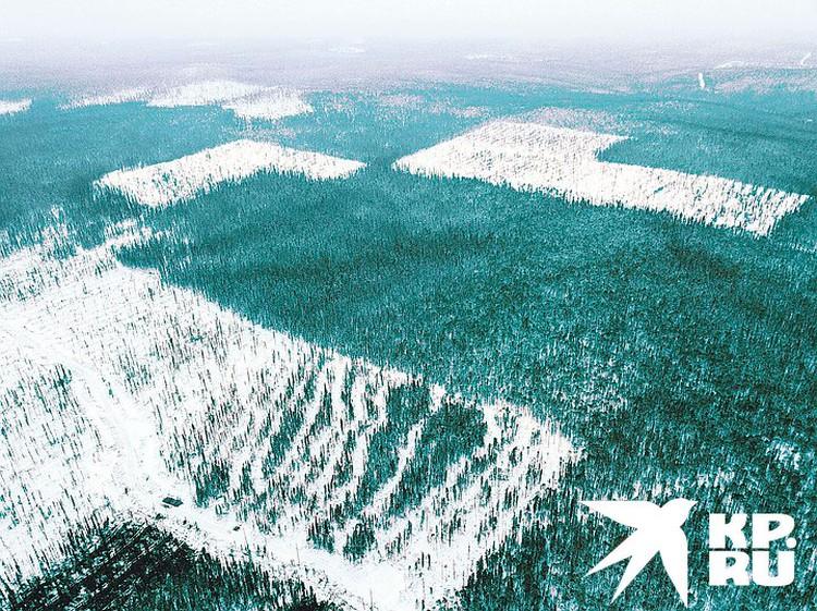 Лес режется аккуратно - ломтями. Из космоса это выглядит как сыпь на теле больного.