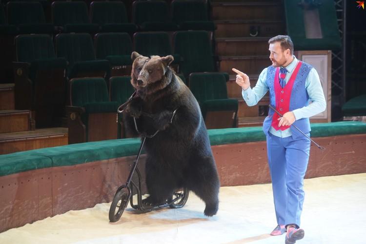 Медведи катались на самокате и гироскутере