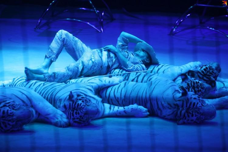 Тигры соскучились по публике