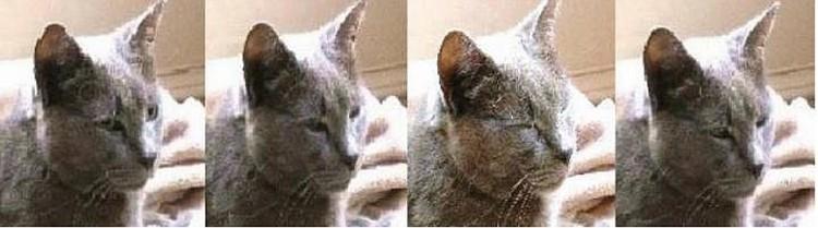 Одна из участниц эксперимента: улыбается в ответ, по-своему, по-кошачьи.