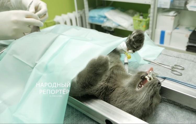 Уникальная операция длилась три часа. Фото: кадр из видео