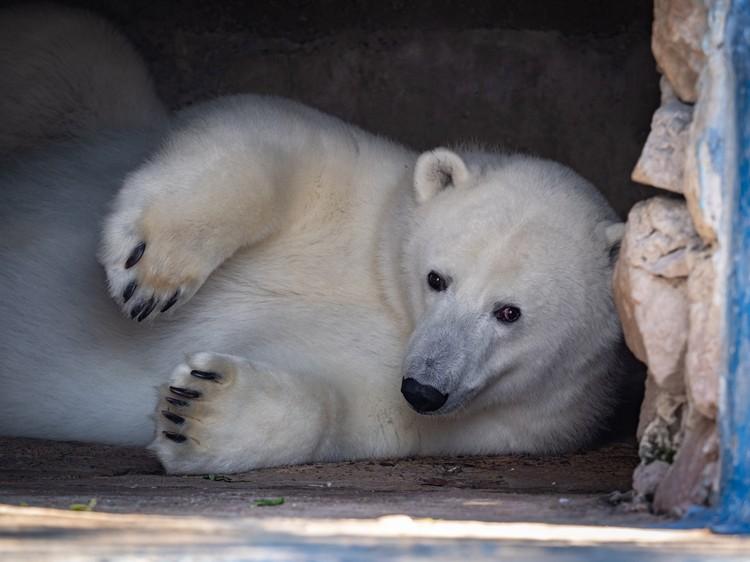 Урсулу спасли и привезли в зоопарк