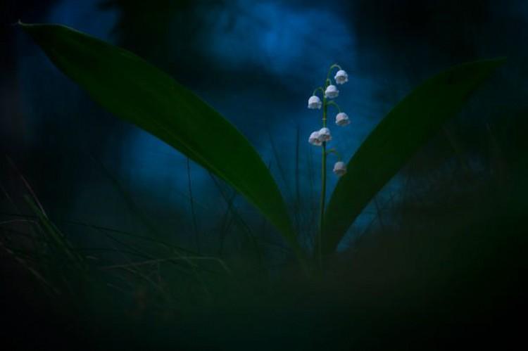 Александр Иванов «Сумеречные колокола». Победитель в категории «Растения и грибы». Фото: © Alexandr Ivanov/Wildlife Photographer of the Year 2020