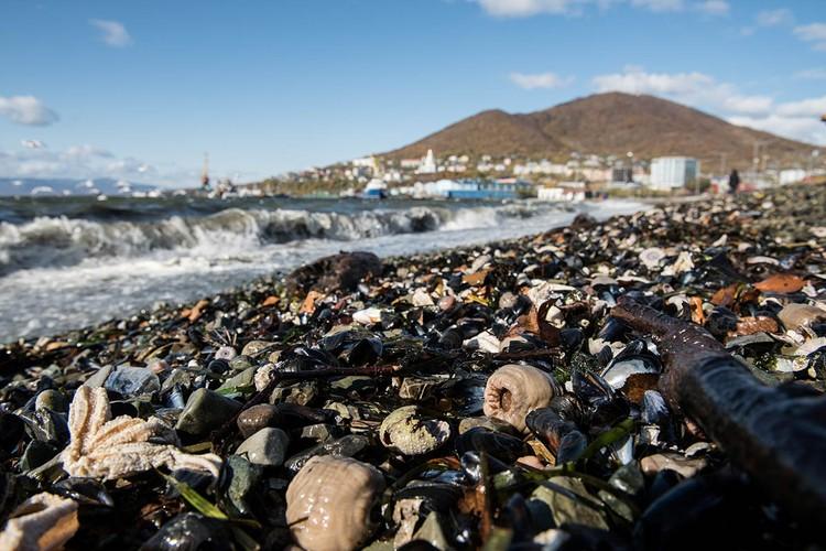 Около месяца история с гибелью морских животных на Камчатке будоражит просторы Рунета.
