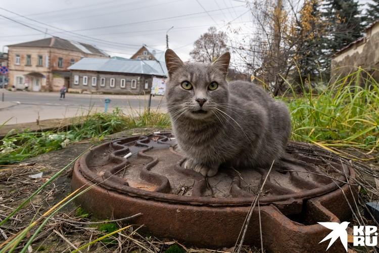 Дерзкий тарусский кот