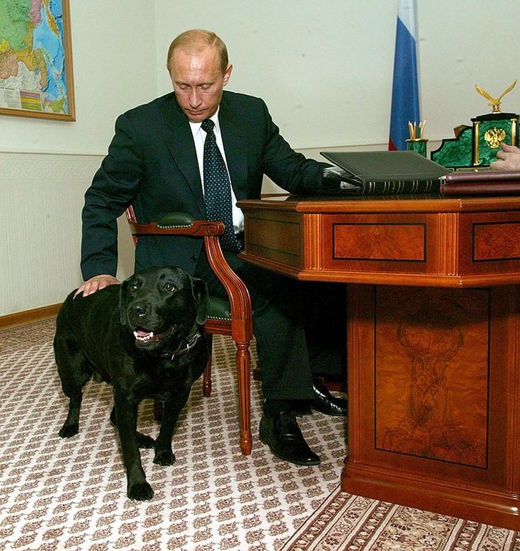 Самой известным домашним любимцем президента России была лабрадор Кони