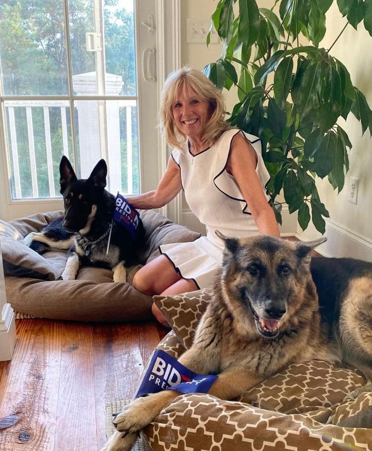 Супруга политика, Джилл Байден, с их собаками Мэйджором и Чемпом