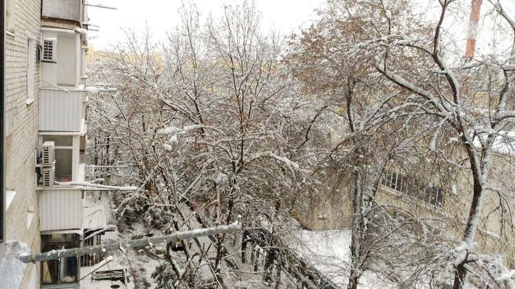 Синоптики говорят, что снег будет идти весь день.