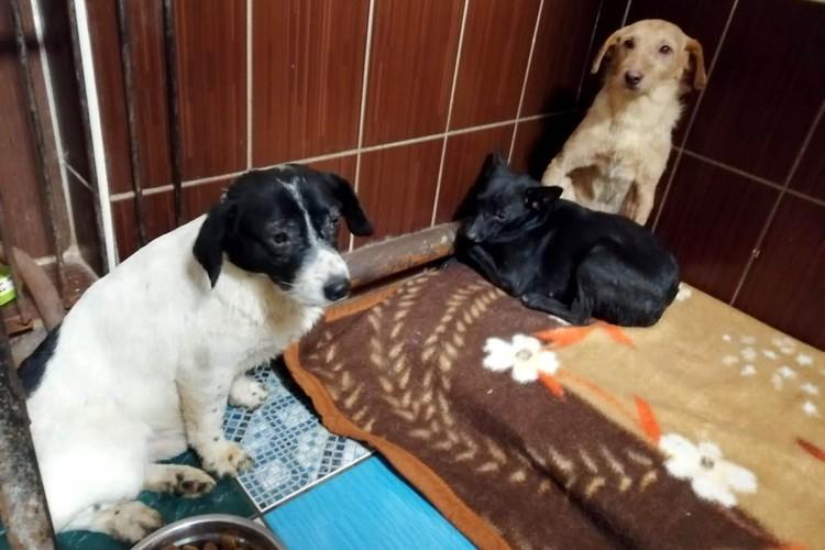 """Выжившие в пожаре собаки сейчас находятся в приюте. Фото: приют """"Друг"""""""