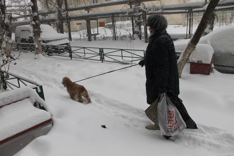 На улицу краснодарцы выходят только в случае необходимости - например, чтобы выгулять собаку.