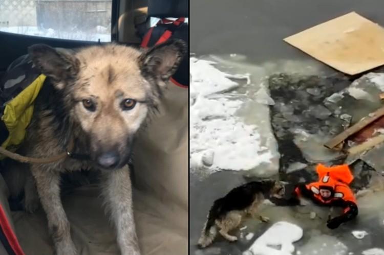 Сухогруз смиренно дожидался спасения пса, иначе бы судно разломило весь лед, и животное упало бы в воду. Фото: vk.com/koshkispas