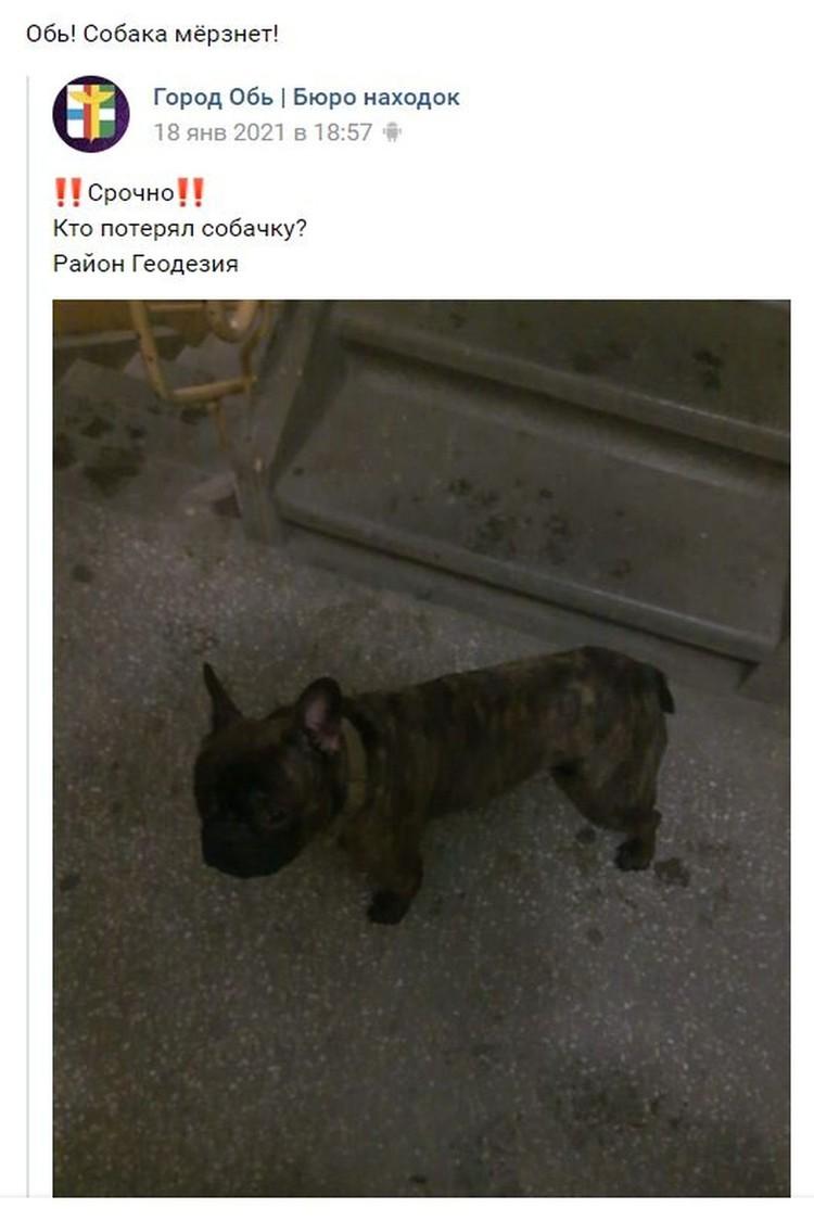 Объявление о том, что собака нашлась. Фото: личный архив героя.