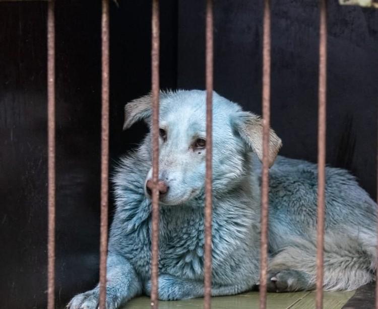 Ветеринары говорят, что собаки довольно упитанные и вполне здоровые. Фото: Зоозащита-НН