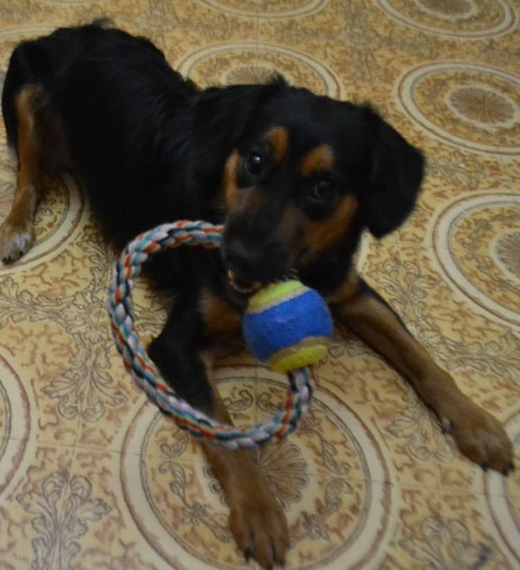 Теперь Джессика почти здорова, любит играть и гулять со своей новой хозяйкой.