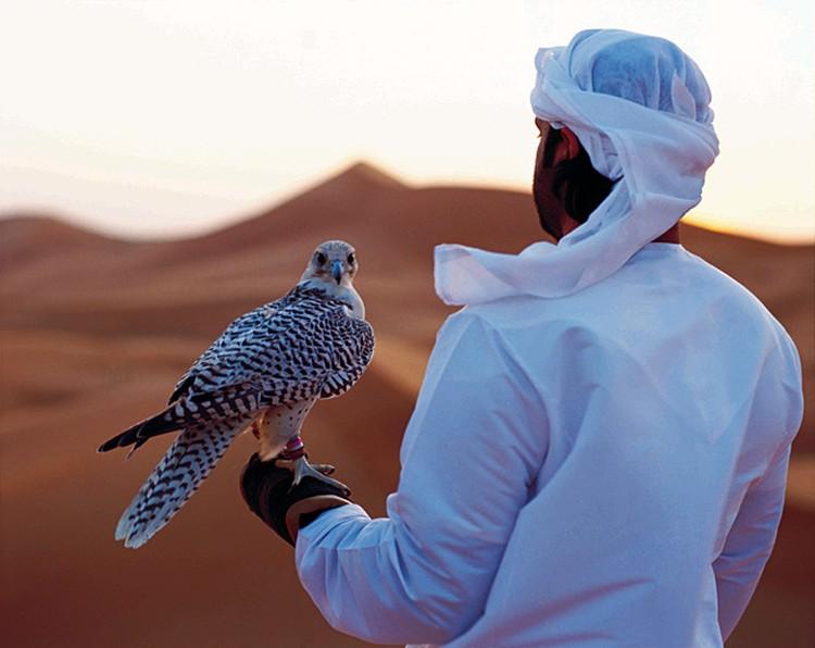 Соколоы по-прежнему главные домашние любимцы жителей Абу Даби. Здесь, кстати, расположен самый большой соколиный госпиталь