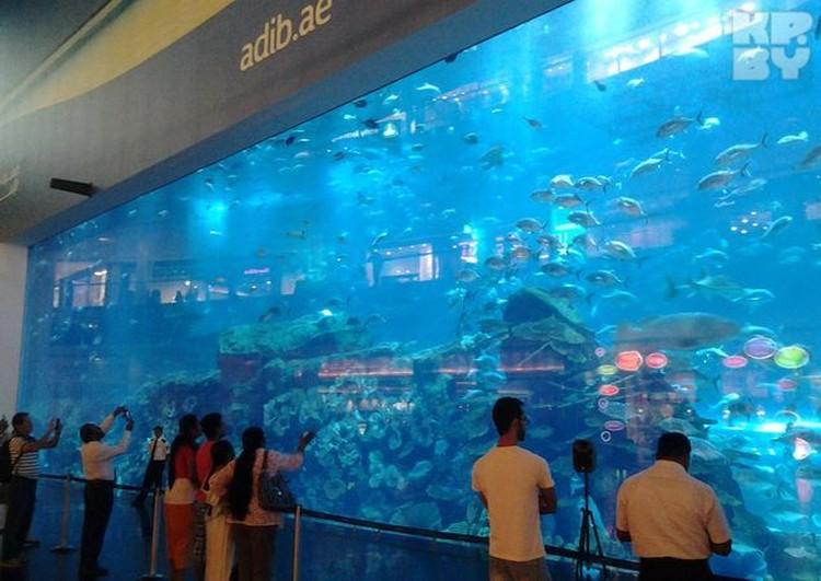"""Аквариум в торговом центре """"Дубай Молл"""" поражает своими размерами"""