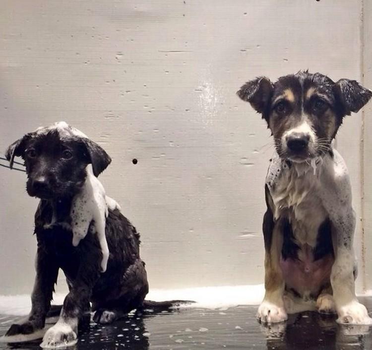 Псы принимают ванну