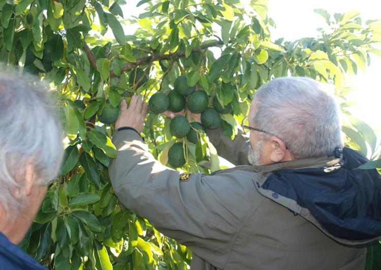 Зепп Хольцер — человек-легенда. Он является ярчайшим представителем аграрного направления, которое получило название «пермакультура»