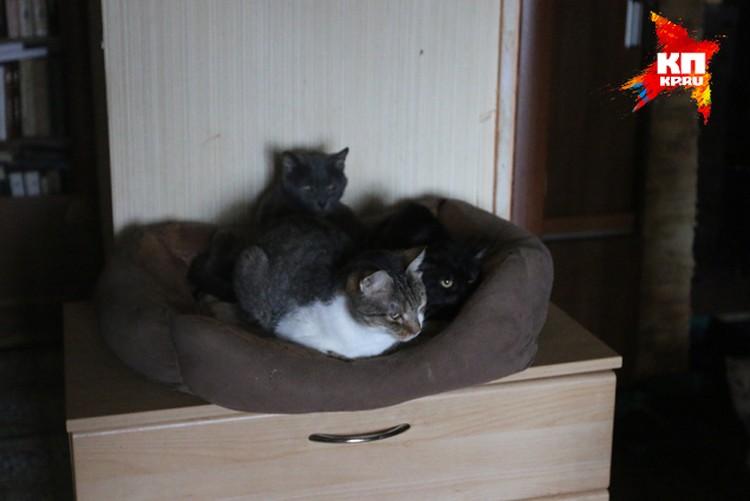 """""""У каждого кота своя судьба, иногда очень тяжелая"""""""
