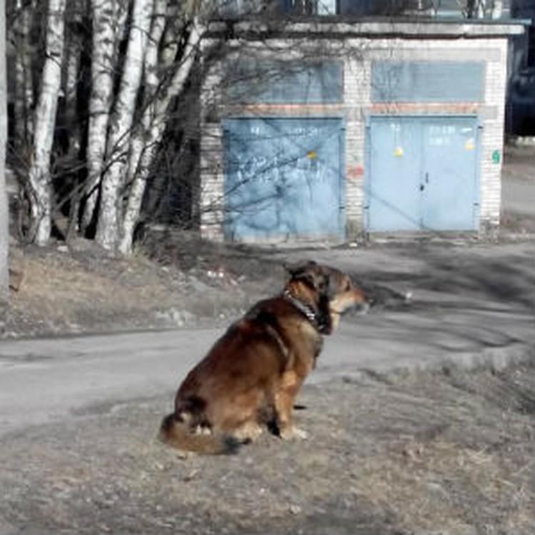 Жители Выборга носят в сумках сосиски для собаки. Фото: СОЦСЕТИ
