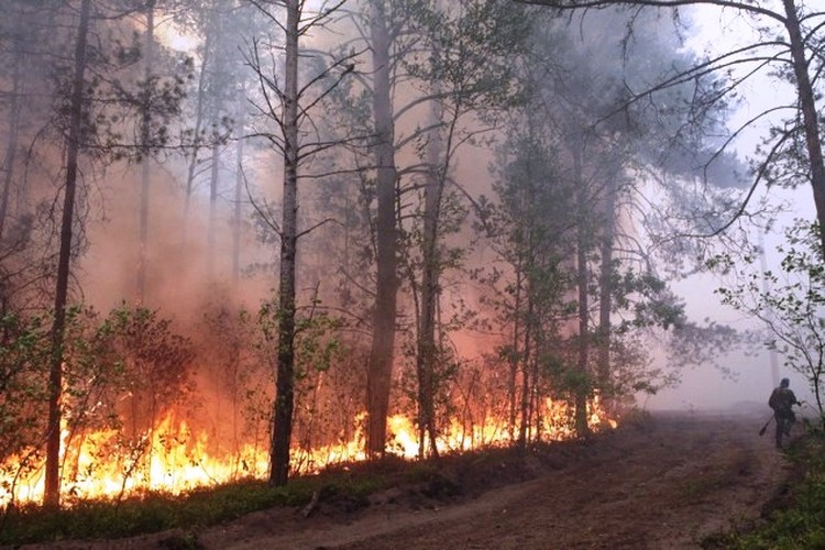 Сначала горели 73 гектара леса. Фото: МЧС.
