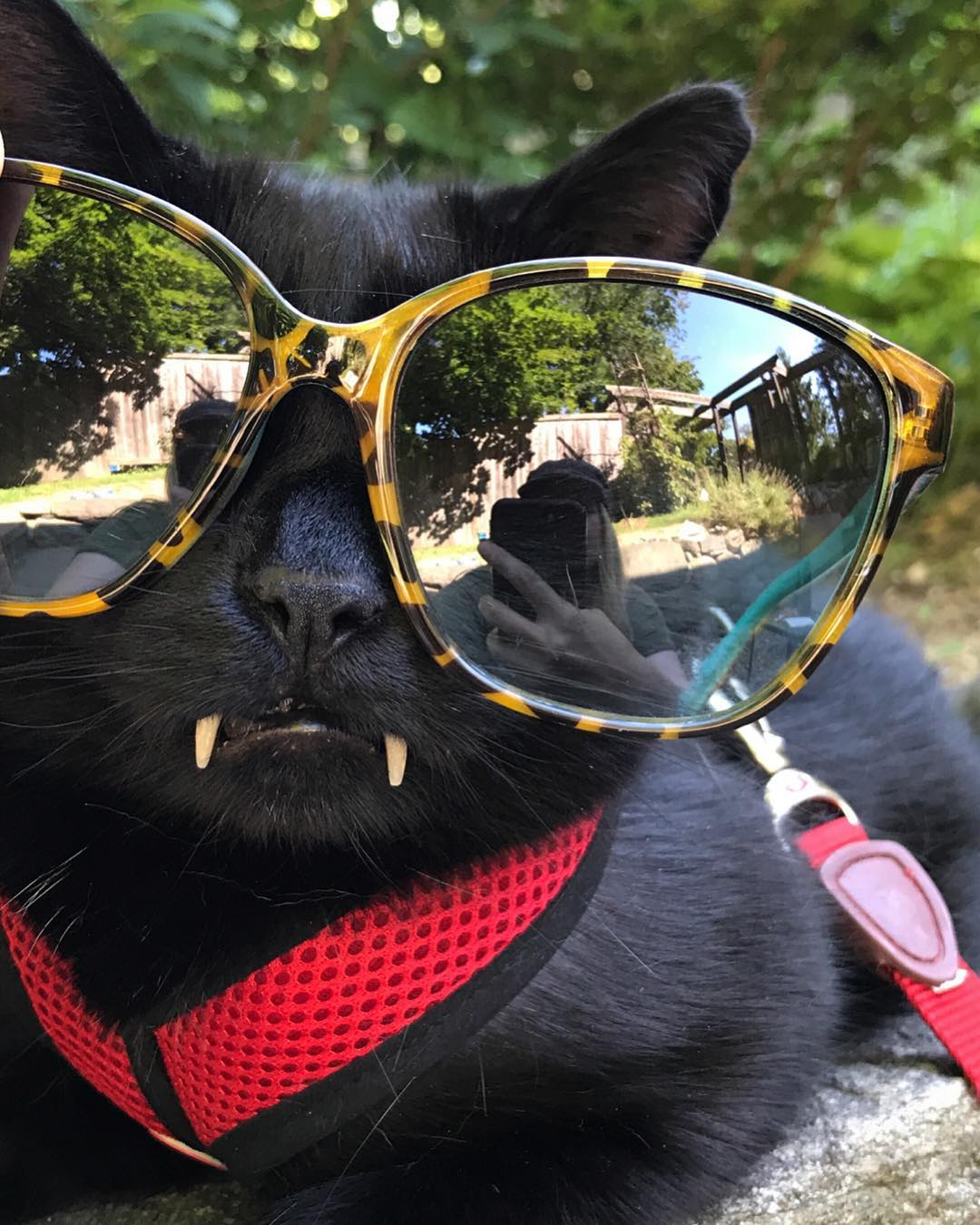 Кот - настоящий стиляга
