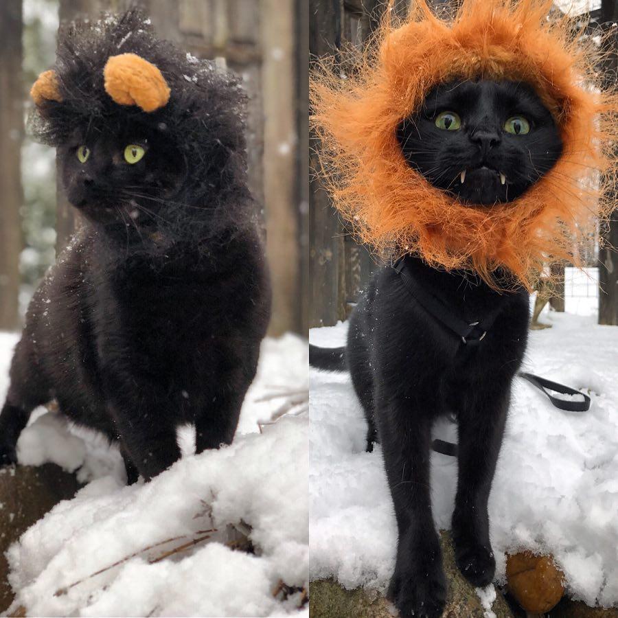 Черный кот из Нью-Йорка стал настоящей звездой. Его страница в Instagram собрала более 90 тысяч подписчиков