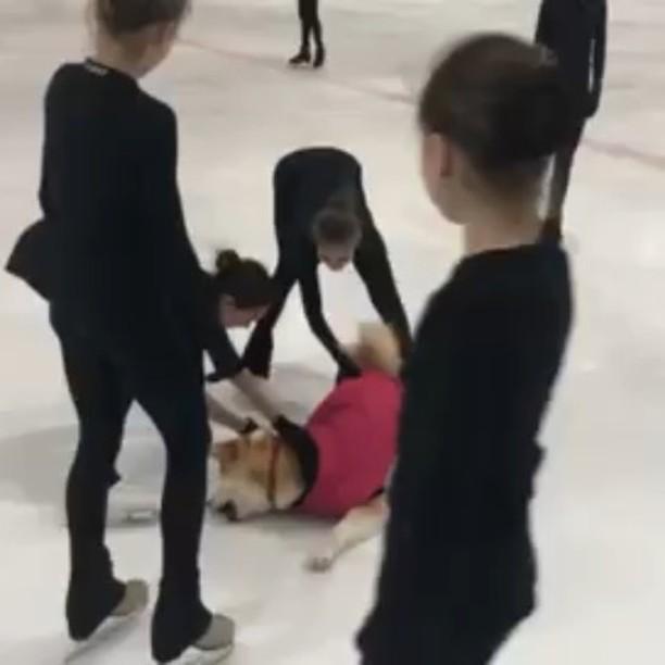 Алина Загитова привела на тренировку свою собаку Масару